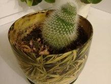 Отчёт по занятию Займитесь выращиванием кактусов в Wachanga!