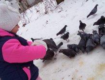 Отчёт по занятию Покормите птиц на прогулке в Wachanga!