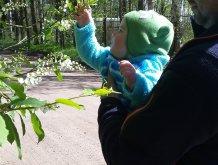 Отчёт по занятию Цветущий сад в Wachanga!