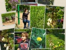 Отчёт по занятию Пейзажи в фокусе малыша в Wachanga!
