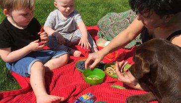 Отчёт по занятию Организуйте домашний пикник! в Wachanga!