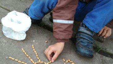 Отчёт по занятию Дачные игры с фасолью в Wachanga!