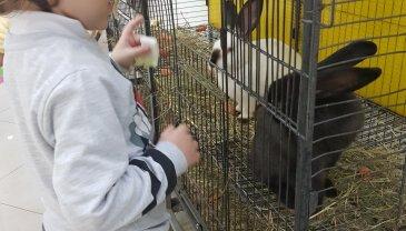 Отчёт по занятию Идём в контактный зоопарк! в Wachanga!