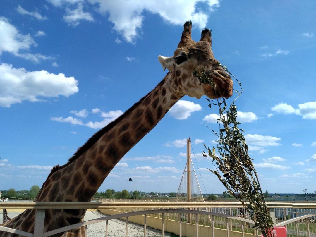 Отчёт по занятию Сходите с ребенком в контактный зоопарк! в Wachanga!