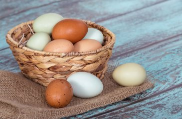 Eggs for breastfeeding Moms