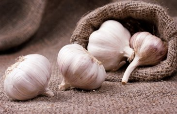 Garlic for breastfeeding moms