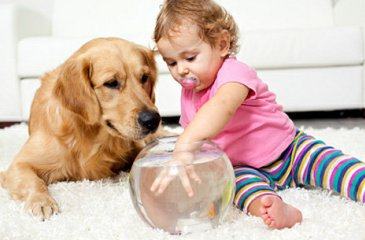 Your pets and a baby