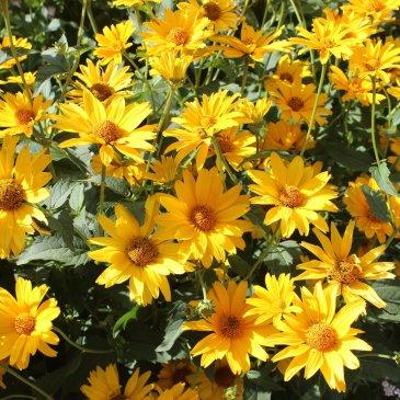 Фотографируйте вместе с ребенком цветы