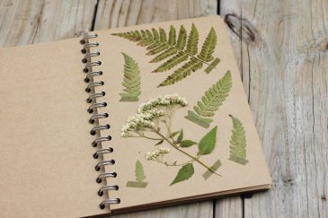 Make a herbarium with your kid!