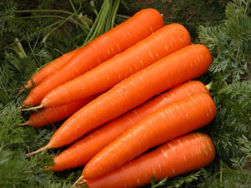 Carrots for breastfeeding Moms