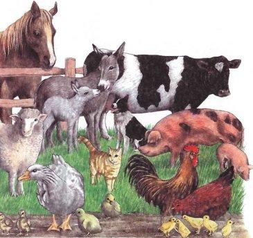 "Topical album ""Domestic animals"""