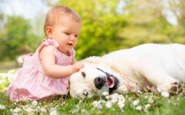 Знакомимся с домашними животными