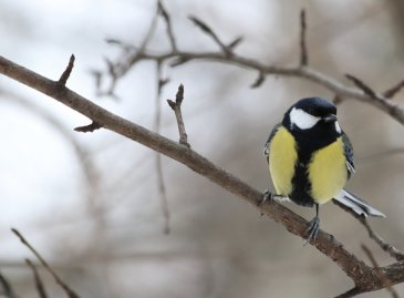 Экокормушка для птиц своими руками