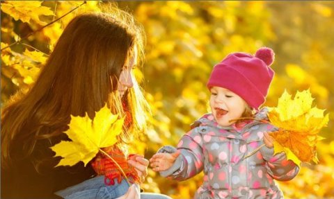 Палитра листьев