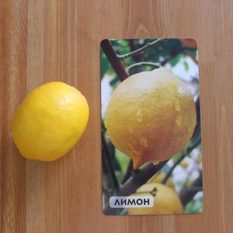 изучение цитрусовых фруктов демонстрация ребёнку