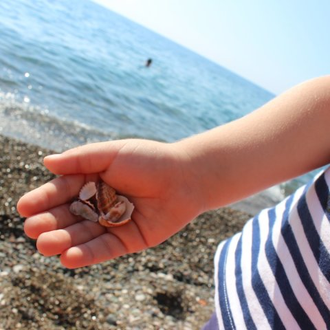 Найдите вместе с ребенком ракушки на морском берегу