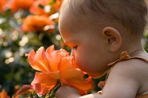 Help your baby learn different scents