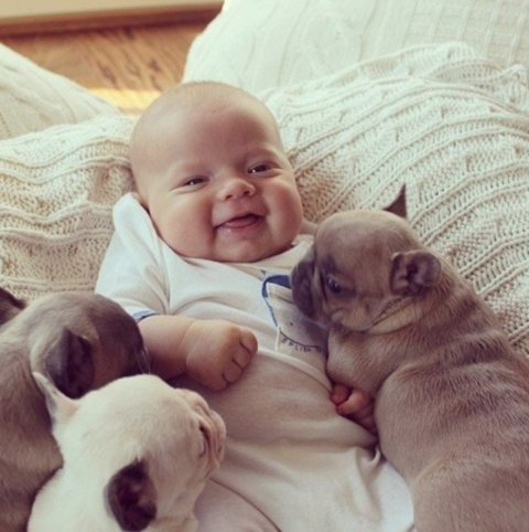 Say Hello to pets with your baby