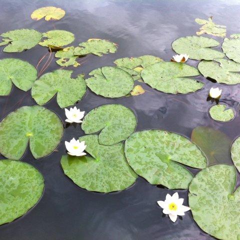 Картинка к занятию Прогулка к озеру в Wachanga