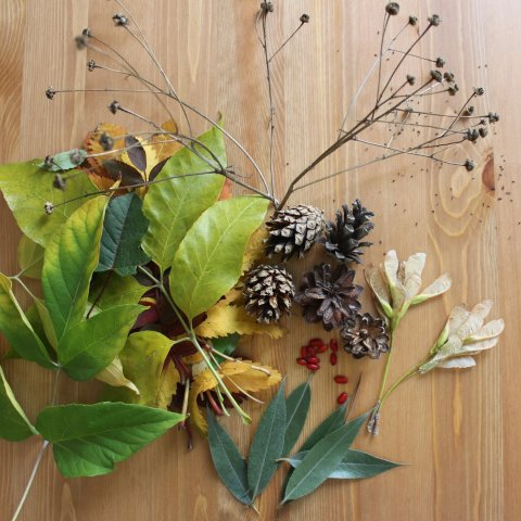 Pick up natural materials for autumn crafts with your kid
