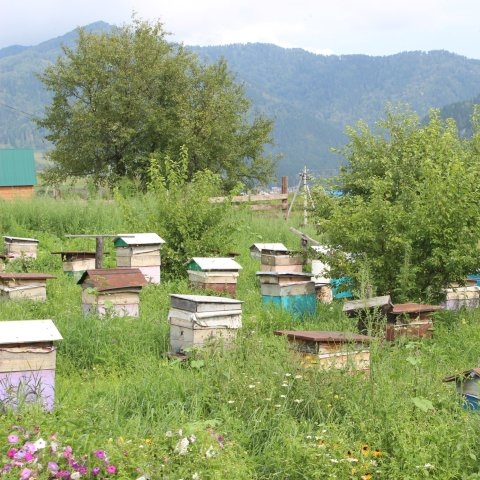 Visit an apiary with your kid
