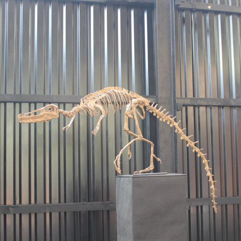 Activity picture for Go with your kid to the paleontological museum in Wachanga