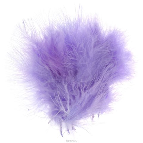 Playing with a feather duster