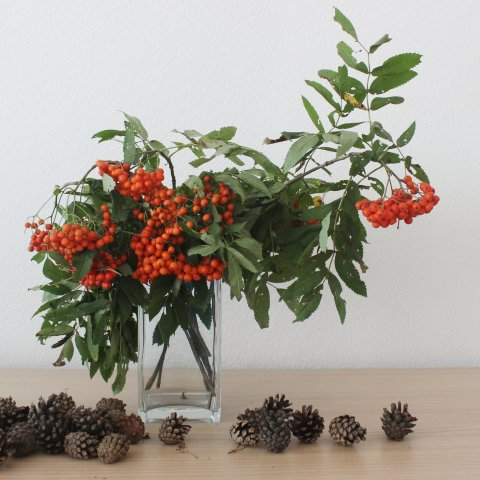 Decorate your home with a rowanberry bouquet