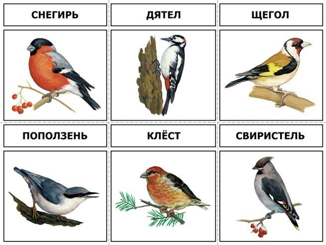 Тематический альбом «Птицы»
