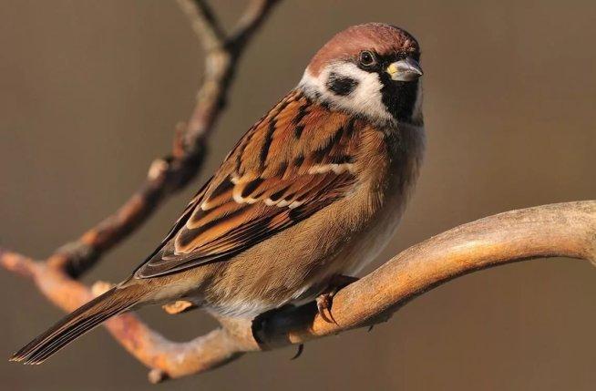 Покормите птиц на прогулке