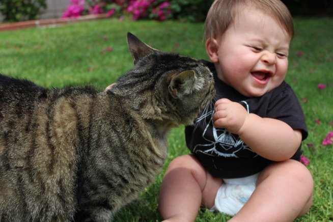 Научите ребенка общаться с домашними животными