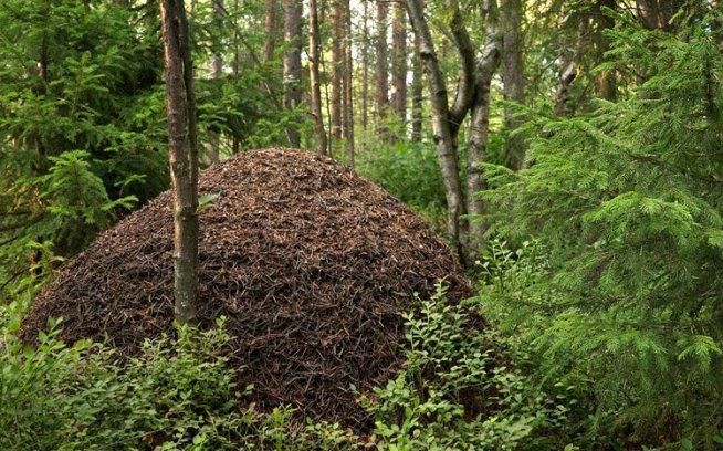 В гости к муравьям