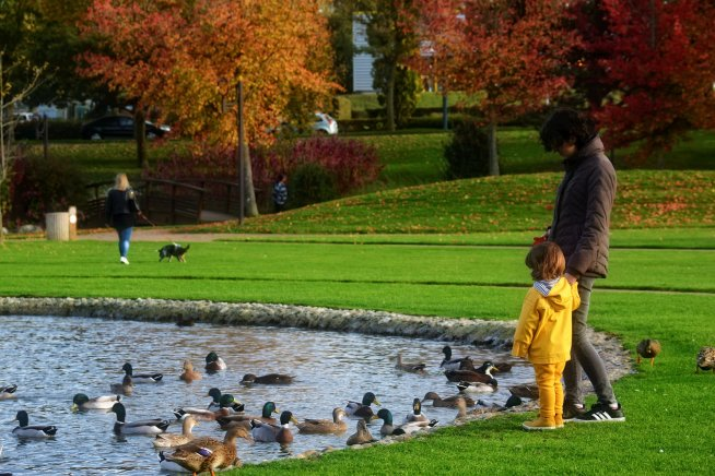 Покормите птиц вместе с ребенком