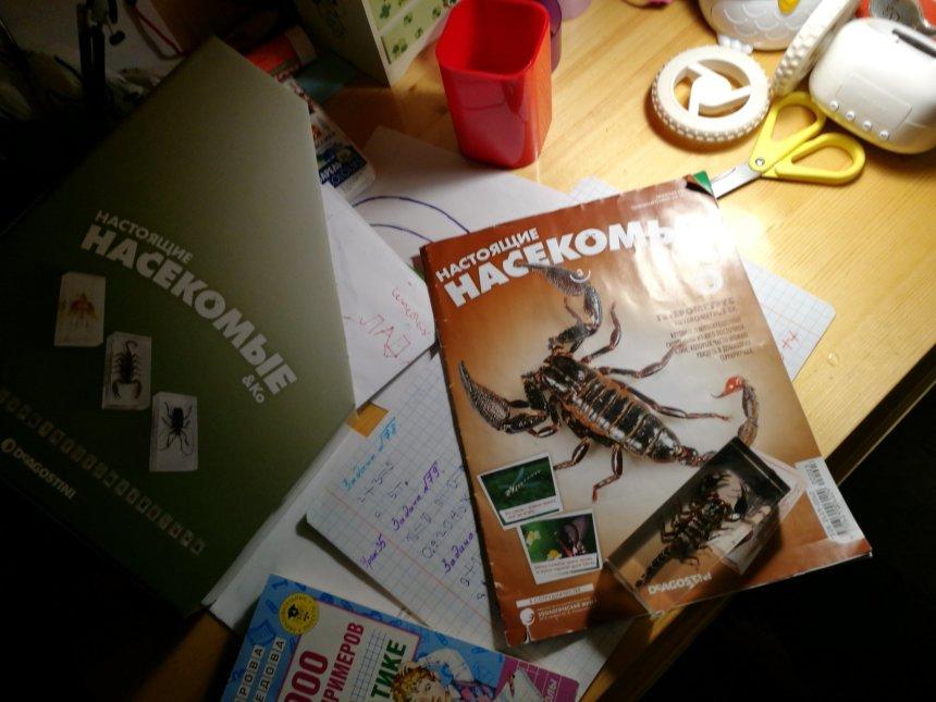 Отчёт по занятию Подписка на детский журнал в Wachanga!