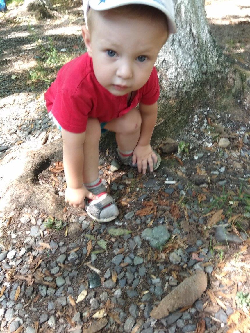 Отчёт по занятию В гости к муравьям в Wachanga!