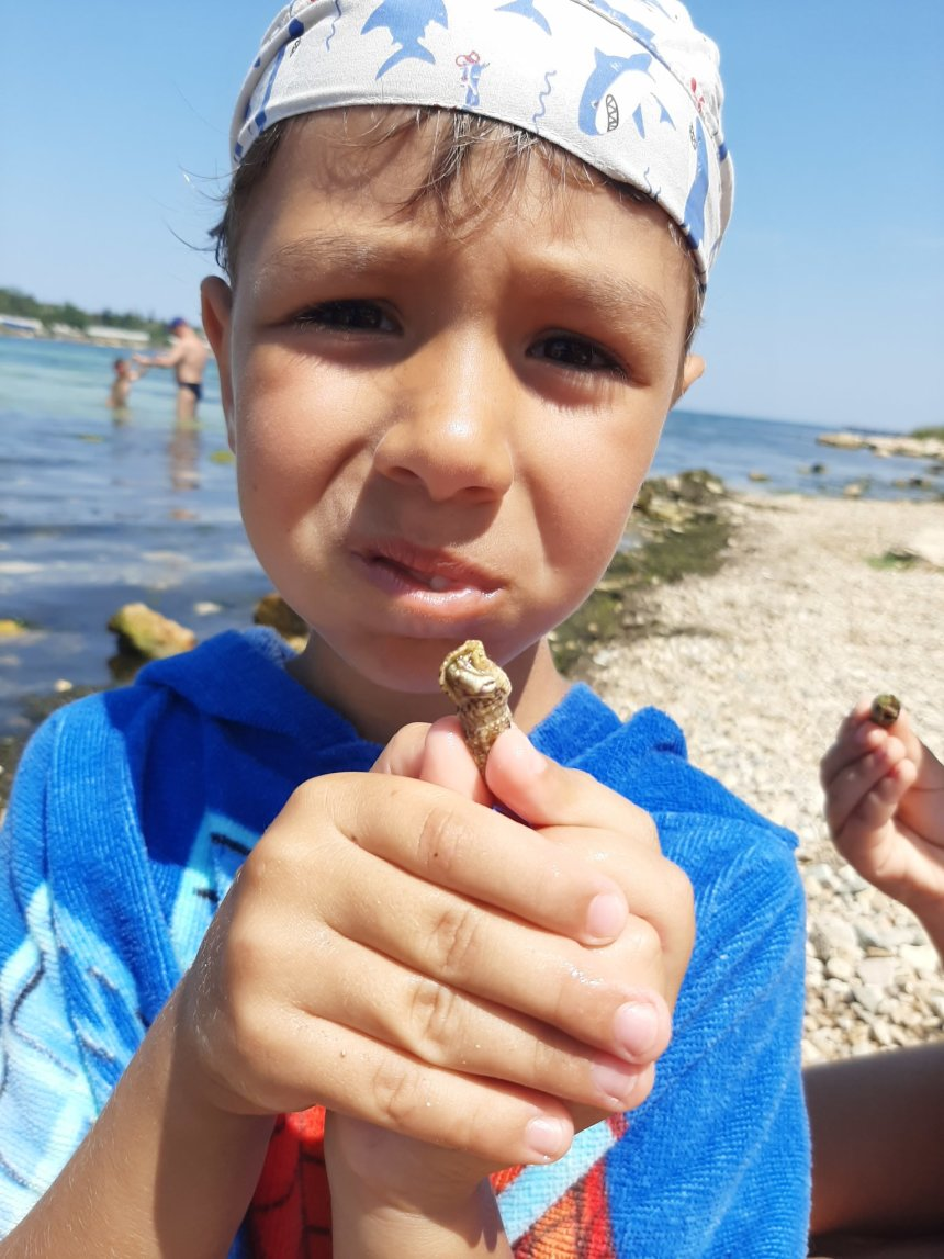 Отчёт по занятию Найдите вместе с ребенком ракушки на морском берегу в Wachanga!