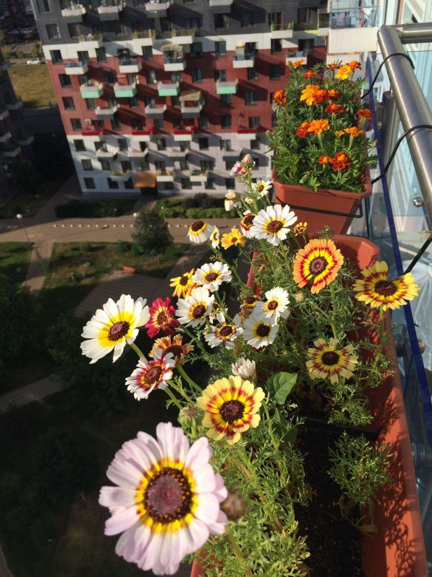 Отчёт по занятию Цветы на балконе в Wachanga!