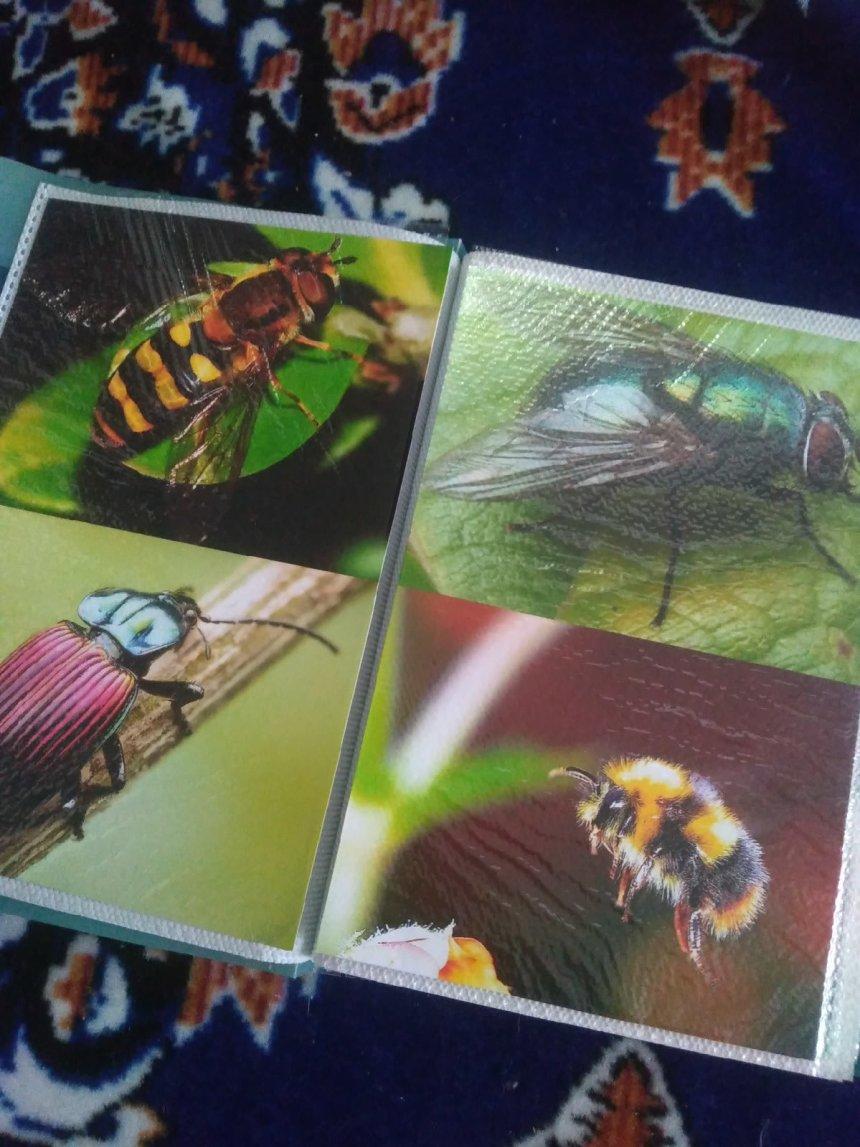 Отчёт по занятию Сделайте для ребенка альбом с интересными фотографиями в Wachanga!