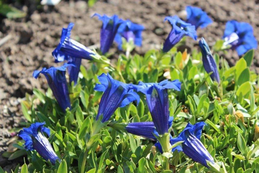 Отчёт по занятию Фотографируйте вместе с ребенком цветы в Wachanga!