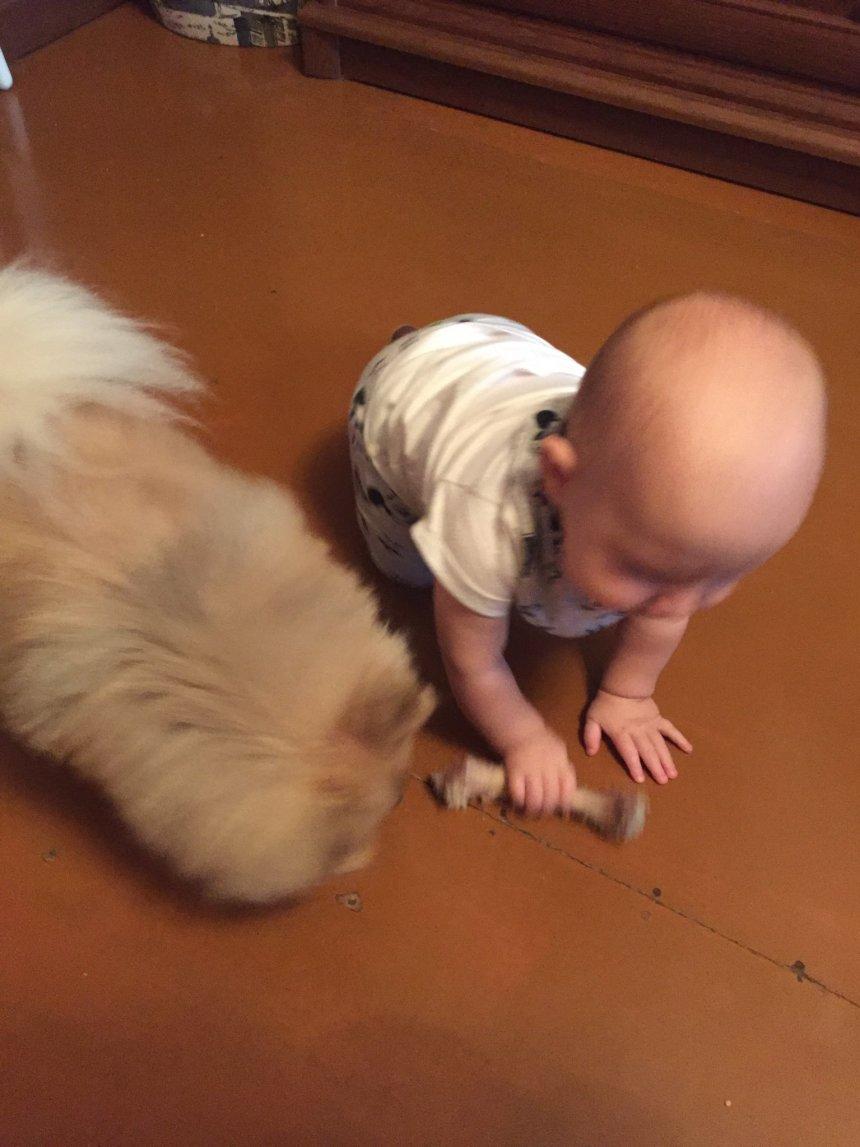 Отчёт по занятию Научите ребенка общаться с домашними животными в Wachanga!