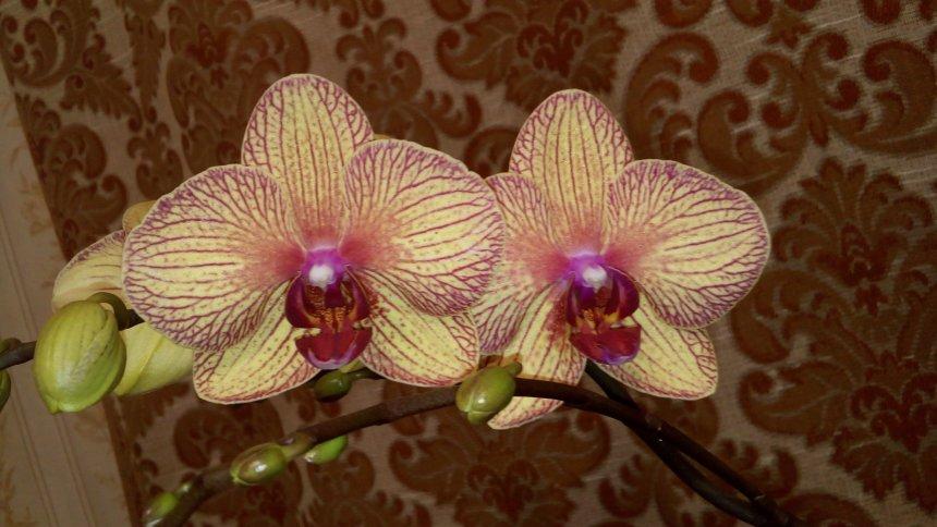 Отчёт по занятию Вырастите орхидею  в Wachanga!