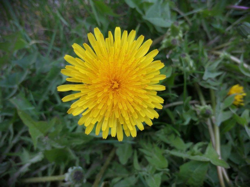 Отчёт по занятию Фотографируем весну в Wachanga!