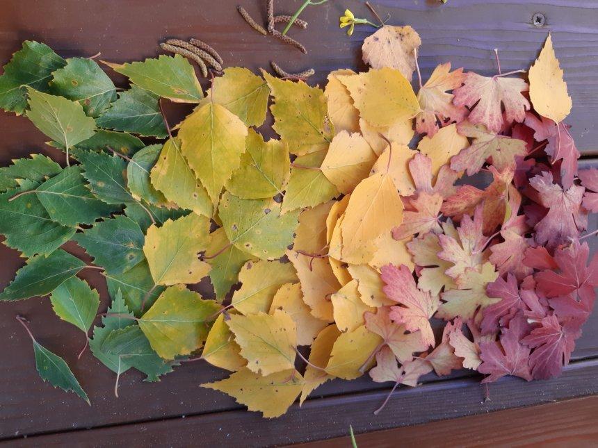 Отчёт по занятию Осенние узоры на асфальте в Wachanga!