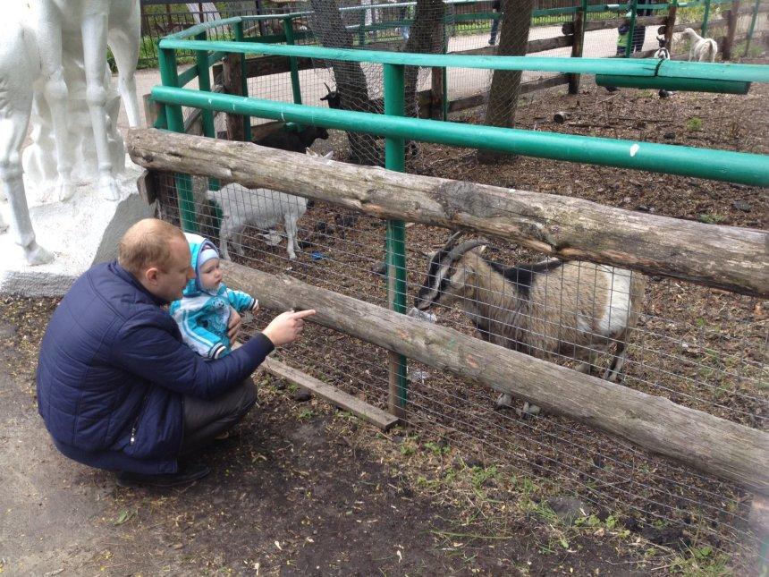 Отчёт по занятию Домашние животные в Wachanga!