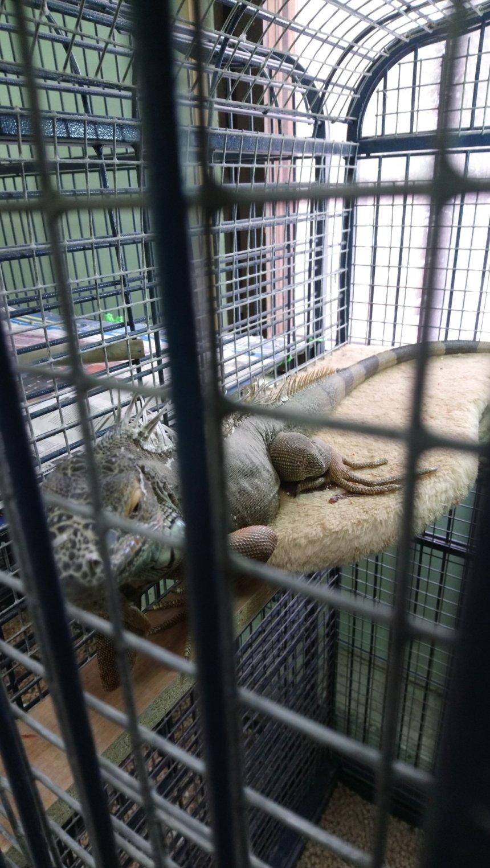 Отчёт по занятию Сходите в зоопарк в Wachanga!