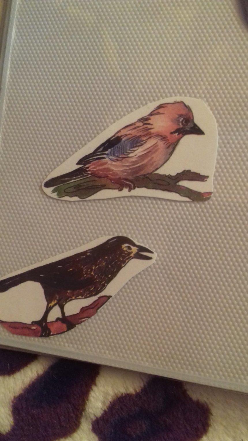 Отчёт по занятию Тематический альбом «Птицы» в Wachanga!