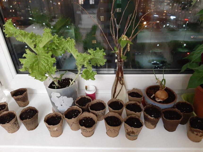 Отчёт по занятию Посадите цветочек в Wachanga!