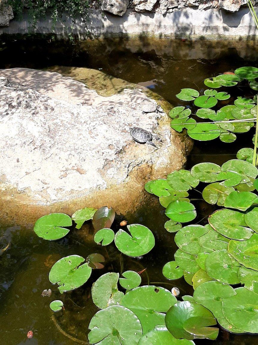 Отчёт по занятию Прогулка к озеру в Wachanga!