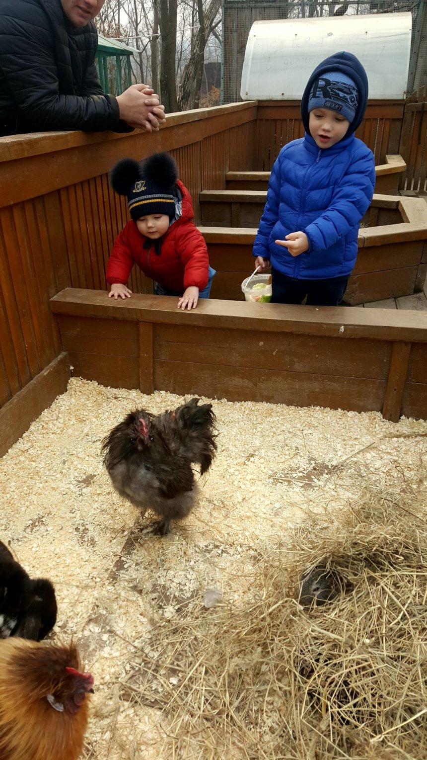 Отчёт по занятию Знакомимся с животными в Wachanga!